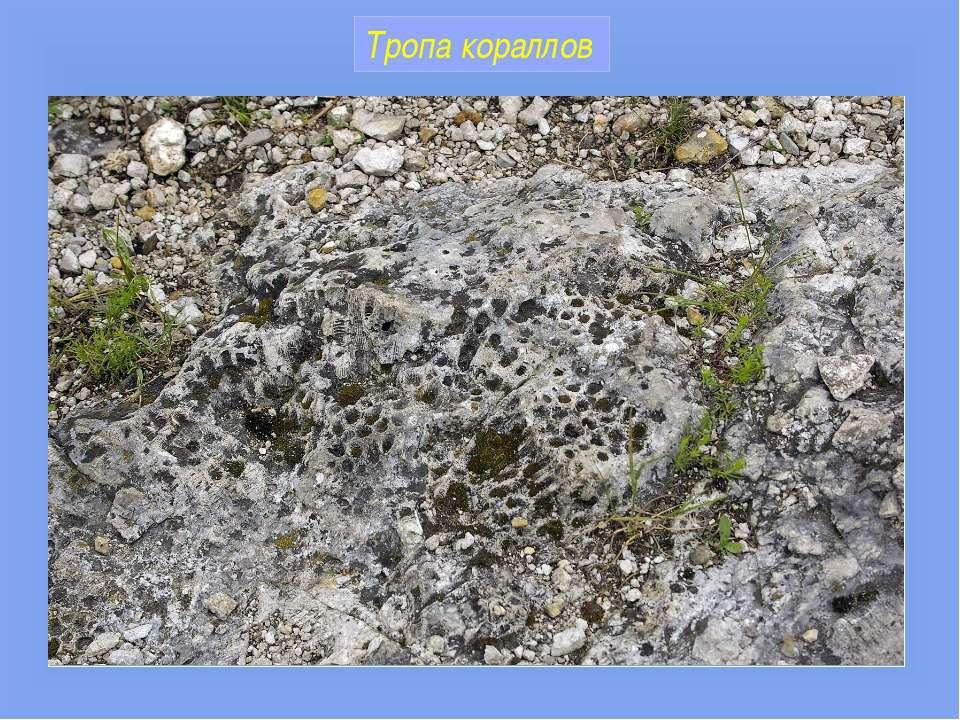 Тропа кораллов