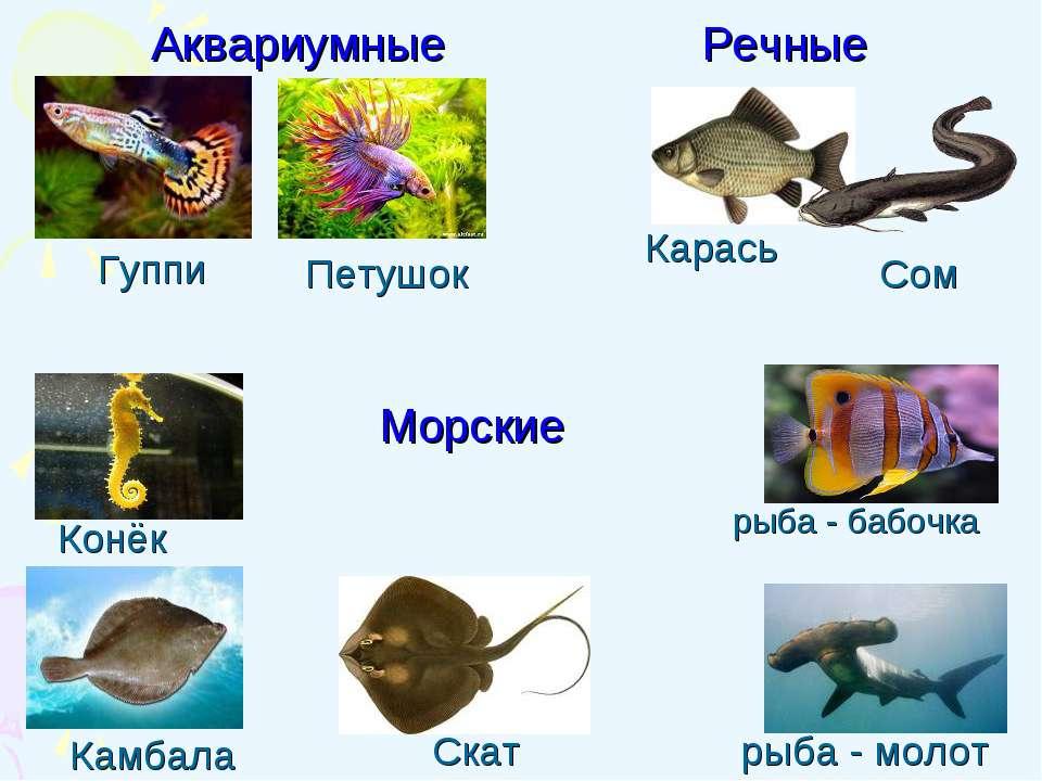 Петушок Камбала Конёк Гуппи Карась Скат Сом рыба - бабочка Аквариумные Речные...