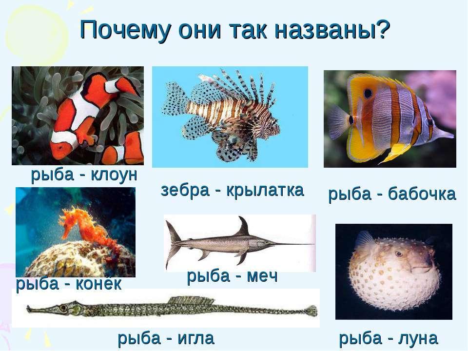 Почему они так названы? рыба - игла рыба - клоун рыба - бабочка рыба - луна з...