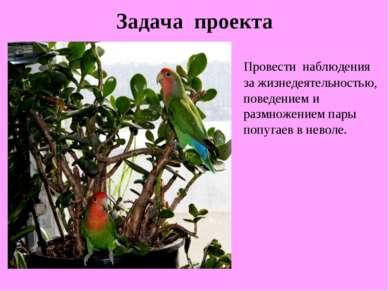 Задача проекта Провести наблюдения за жизнедеятельностью, поведением и размно...