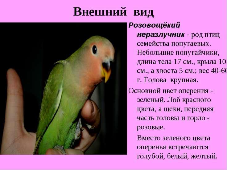 Внешний вид Розовощёкий неразлучник - род птиц семейства попугаевых. Небольши...