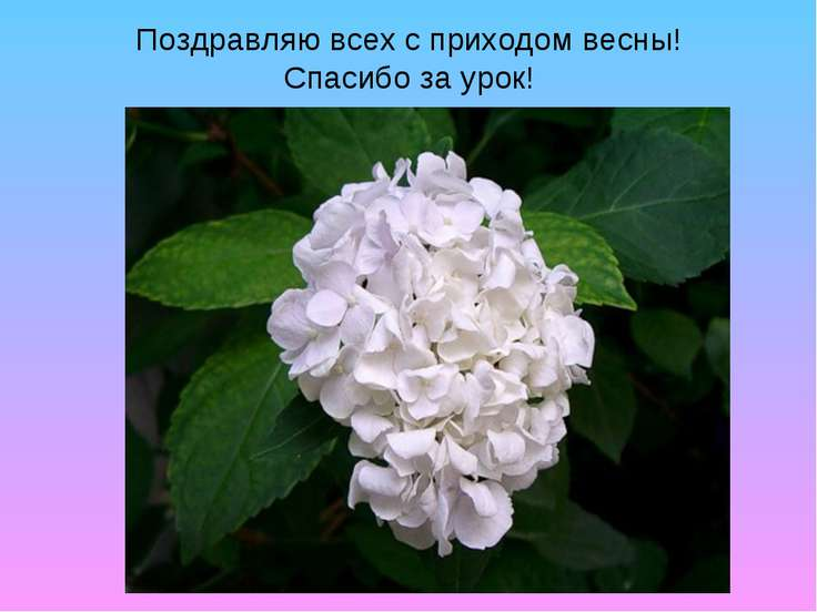 Поздравляю всех с приходом весны! Спасибо за урок!