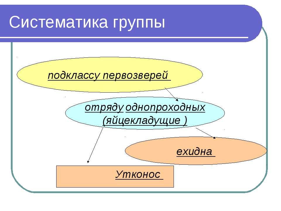 Систематика группы Утконос отряду однопроходных (яйцекладущие ) ехидна подкла...