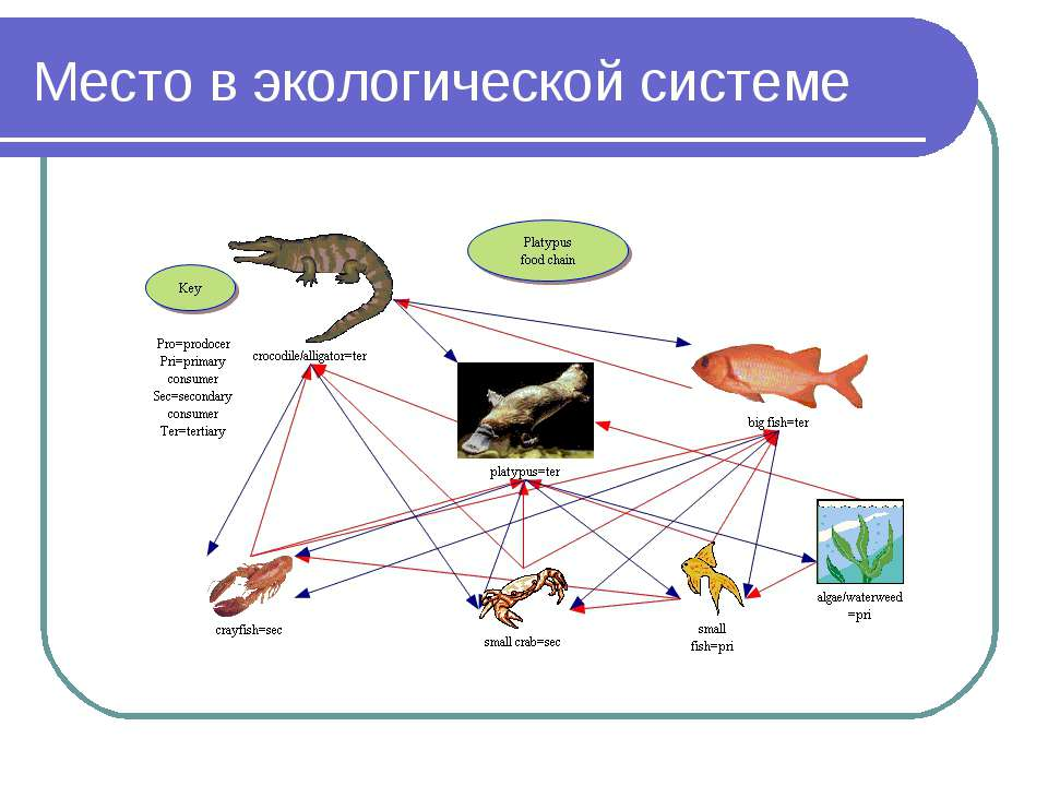 Место в экологической системе