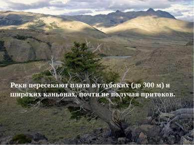 Реки пересекают плато в глубоких (до 300 м) и широких каньонах, почти не полу...