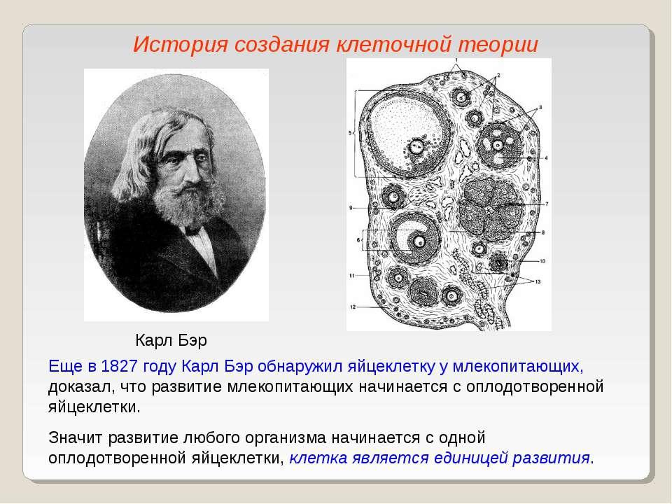 Карл Бэр Еще в 1827 году Карл Бэр обнаружил яйцеклетку у млекопитающих, доказ...
