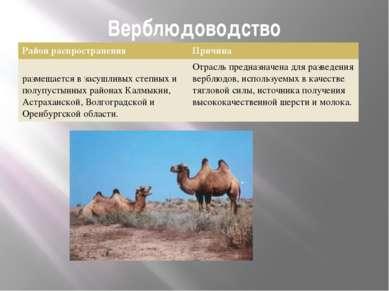 Верблюдоводство Район распространения Причина размещается в засушливых степны...