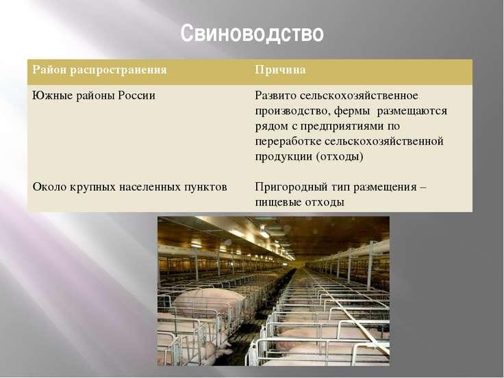 Свиноводство Район распространения Причина Южные районы России Околокрупных н...