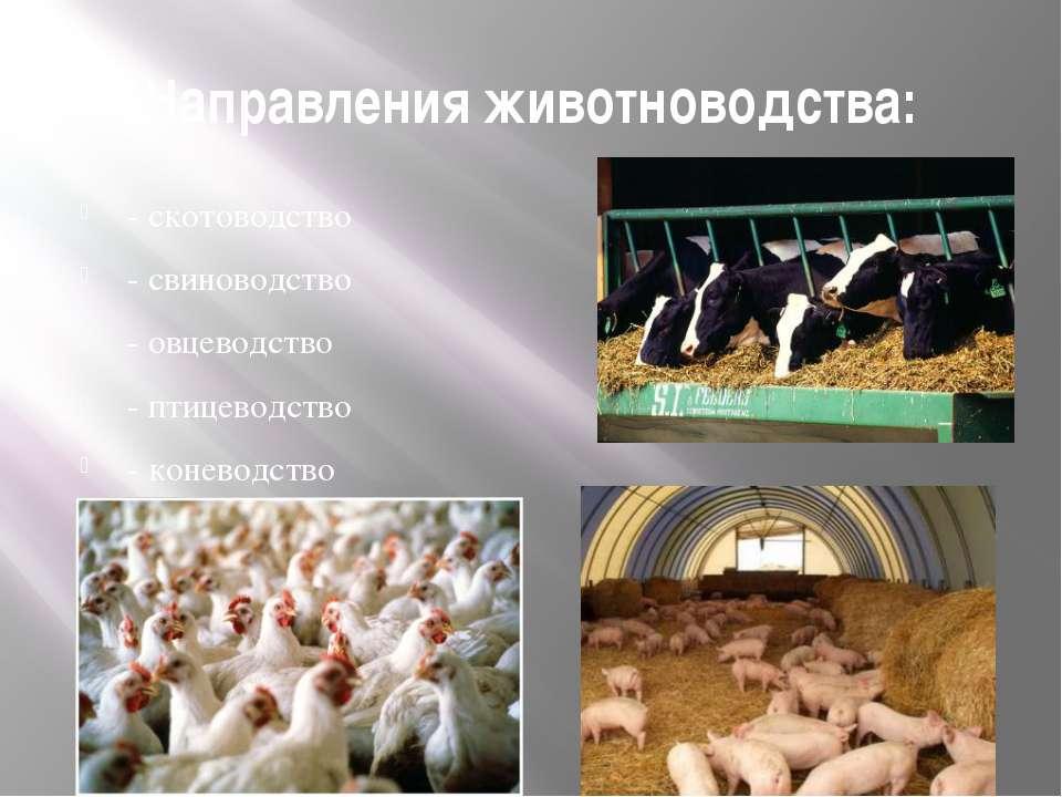 Направления животноводства: - скотоводство - свиноводство - овцеводство - пти...