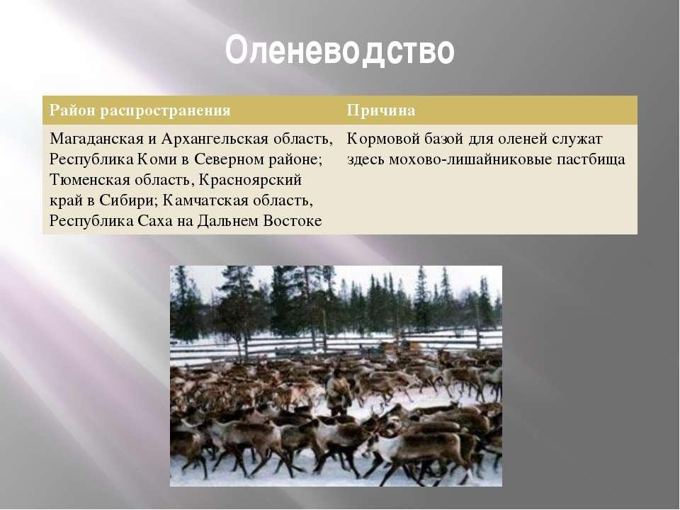 Оленеводство Район распространения Причина Магаданская и Архангельская област...