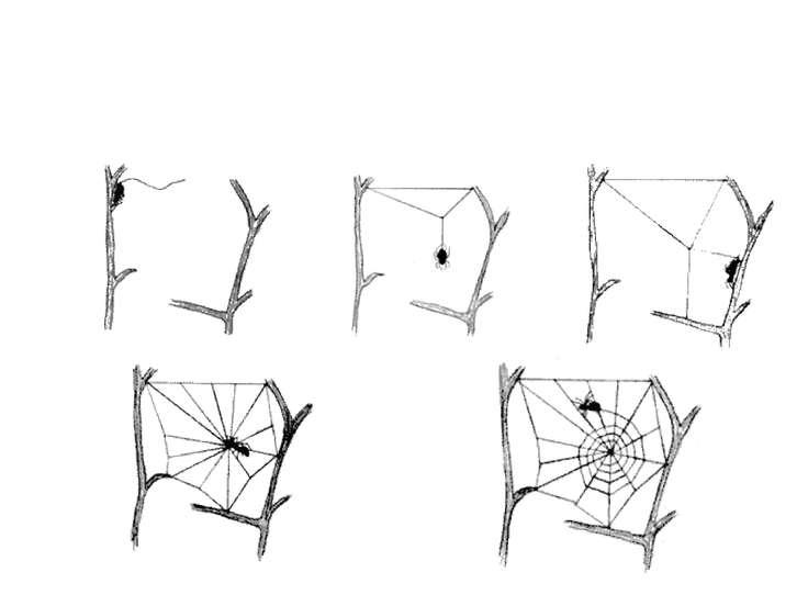 Этапы построения ловчей сети. 1. 2. 3. 4. 5.