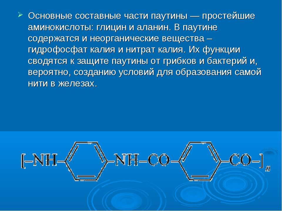 Основные составные части паутины — простейшие аминокислоты: глицин и аланин. ...