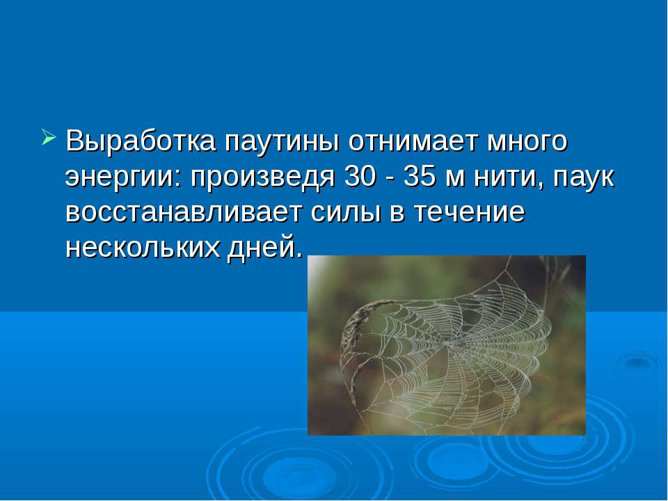 Выработка паутины отнимает много энергии: произведя 30 - 35 м нити, паук восс...