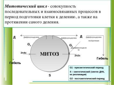Митотический цикл - совокупность последовательных и взаимосвязанных процессов...
