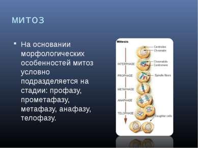 митоз На основании морфологических особенностей митоз условно подразделяется ...