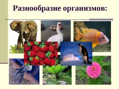 * Разнообразие организмов: