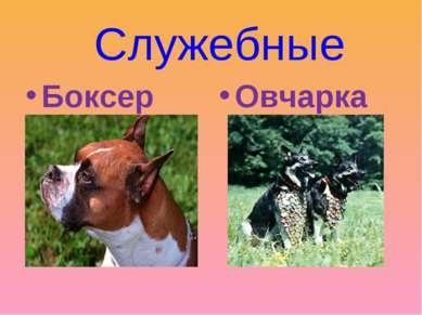 Служебные Боксер Овчарка