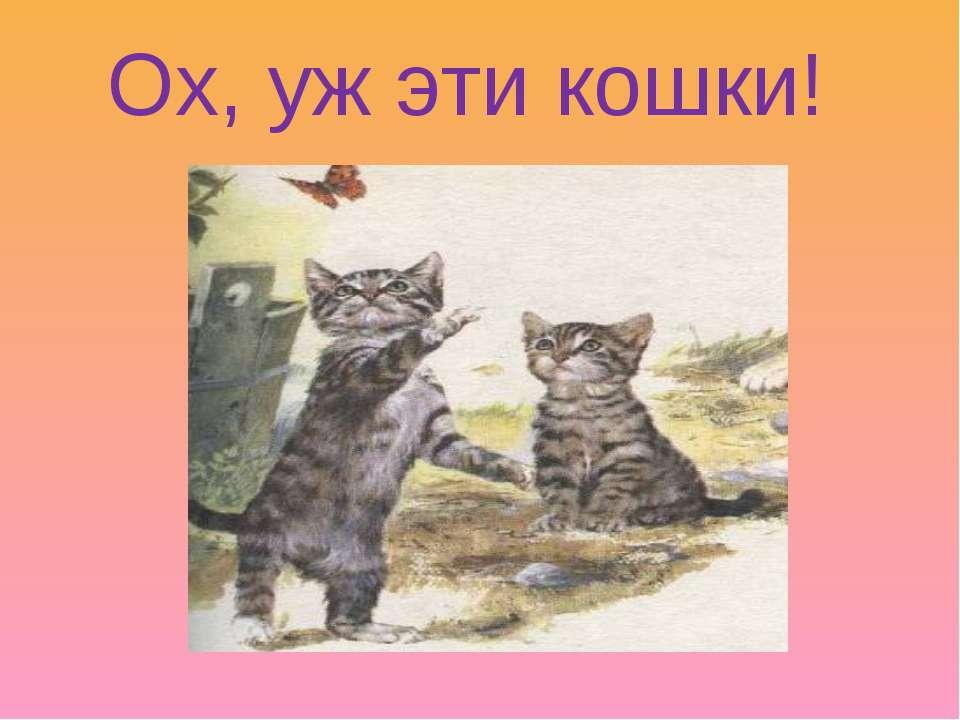 Ох, уж эти кошки!