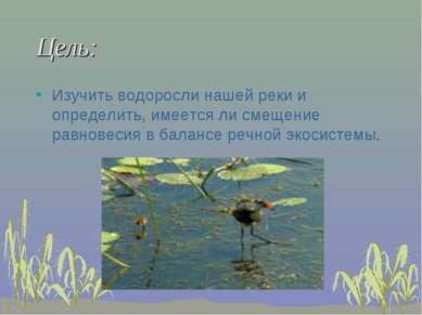 Цель: Изучить водоросли нашей реки и определить, имеется ли смещение равновес...
