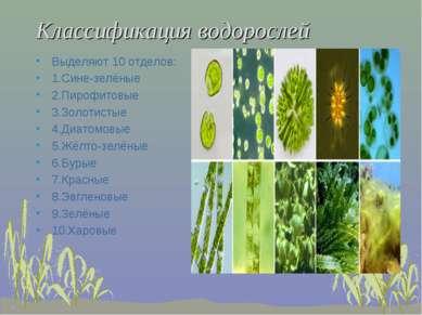 Классификация водорослей Выделяют 10 отделов: 1.Сине-зелёные 2.Пирофитовые 3....