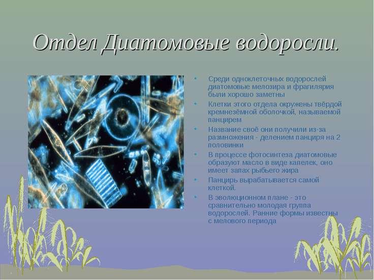 Отдел Диатомовые водоросли. Среди одноклеточных водорослей диатомовые мелозир...