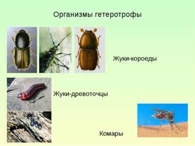 Организмы гетеротрофы Жуки-короеды Жуки-древоточцы Комары