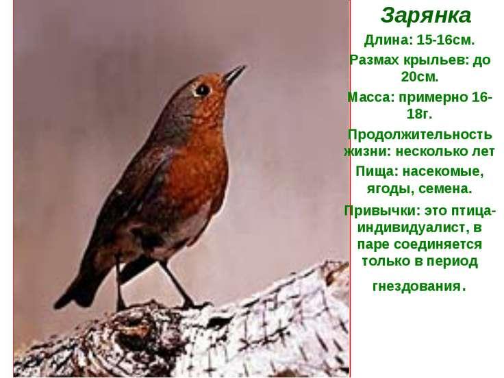 Зарянка Длина: 15-16см. Размах крыльев: до 20см. Масса: примерно 16-18г. Прод...