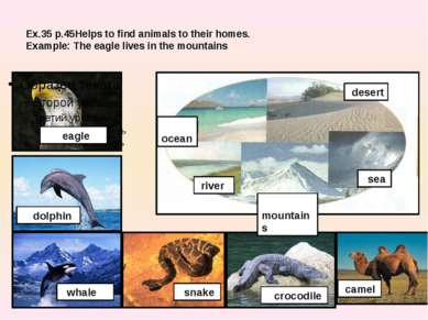 Ex.35 p.45Helps to find animals to their homes. Example: The eagle lives in t...