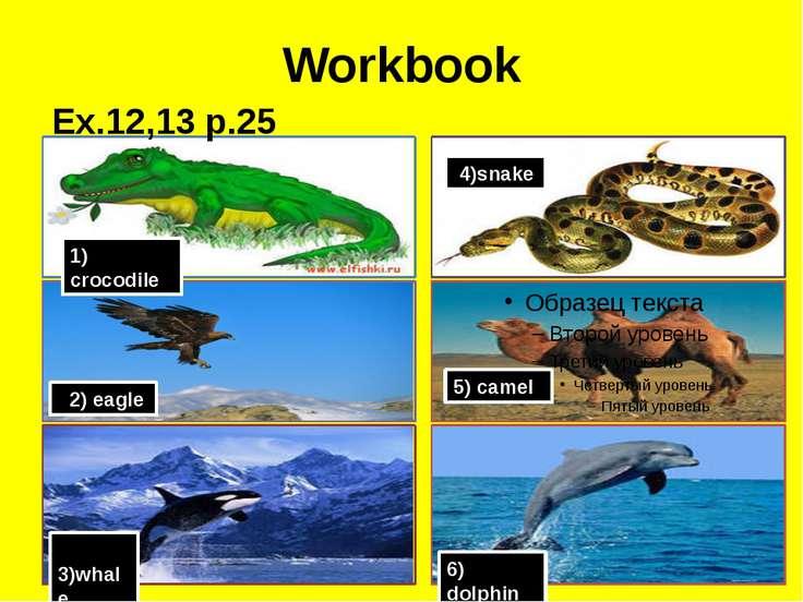 Workbook 1) crocodile 2) eagle 3)whale 4)snake 5) camel 6) dolphin Ex.12,13 p.25
