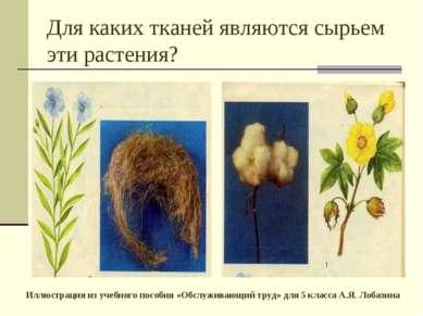 Для каких тканей являются сырьем эти растения? Иллюстрация из учебного пособи...