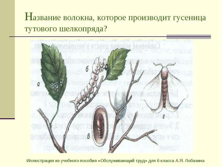 Название волокна, которое производит гусеница тутового шелкопряда? Иллюстраци...
