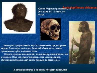 Australopithecus africanus Южная Африка (Трансвааль), 3.3 (или даже 3.5) - 2....