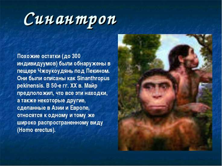 Синантроп Похожие остатки (до 300 индивидуумов) были обнаружены в пещере Чжоу...