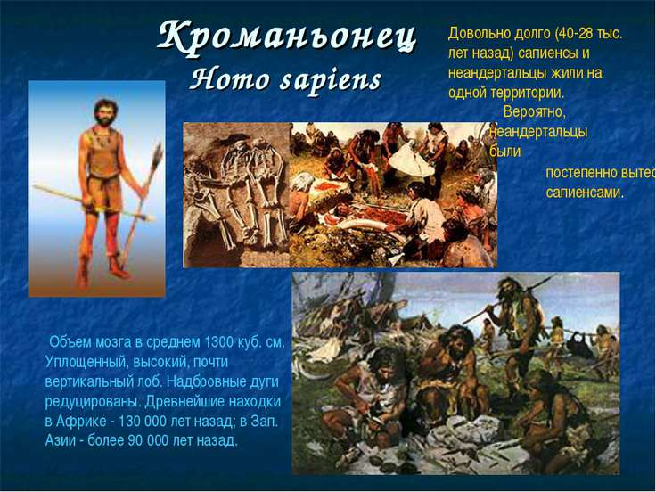 Кроманьонец Homo sapiens Объем мозга в среднем 1300 куб. см. Уплощенный, высо...