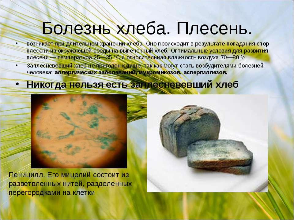Болезнь хлеба. Плесень. возникает при длительном хранении хлеба. Оно происход...