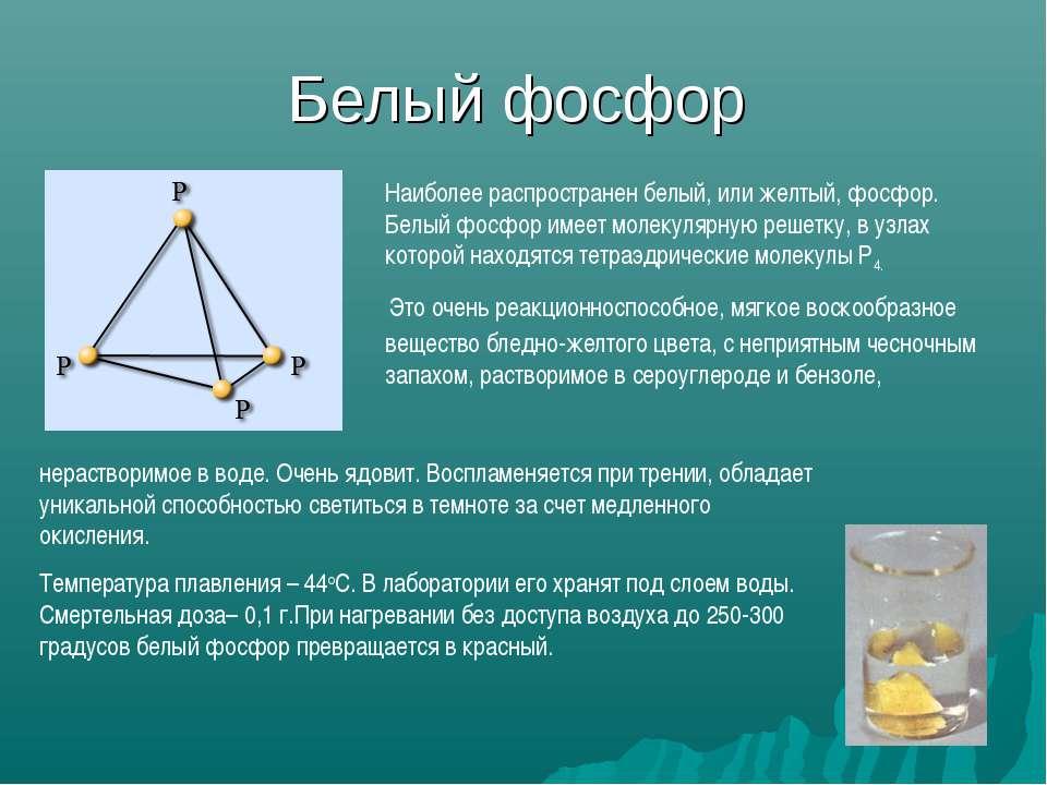 Белый фосфор Наиболее распространен белый, или желтый, фосфор. Белый фосфор и...