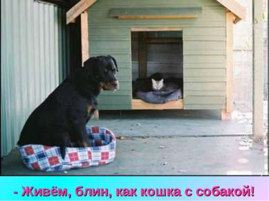 - Живём, блин, как кошка с собакой!