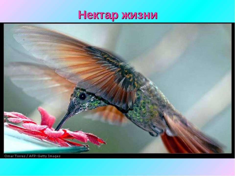 Нектар жизни