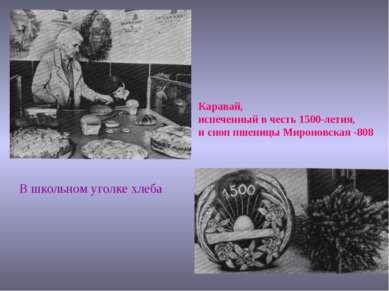 Каравай, испеченный в честь 1500-летия, и сноп пшеницы Мироновская -808 В шко...
