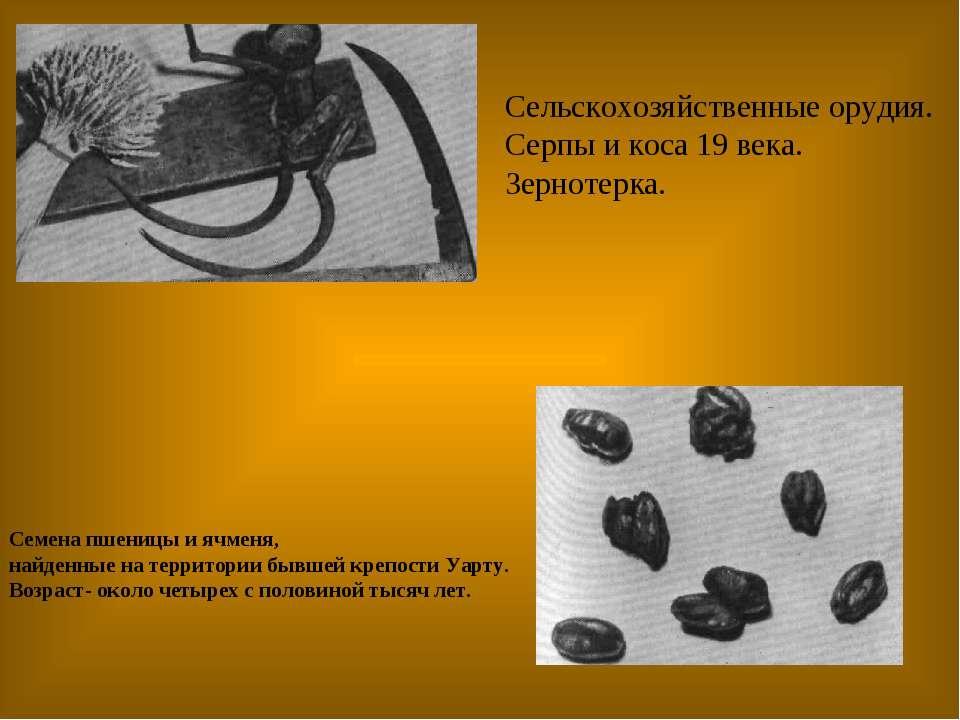 Семена пшеницы и ячменя, найденные на территории бывшей крепости Уарту. Возра...