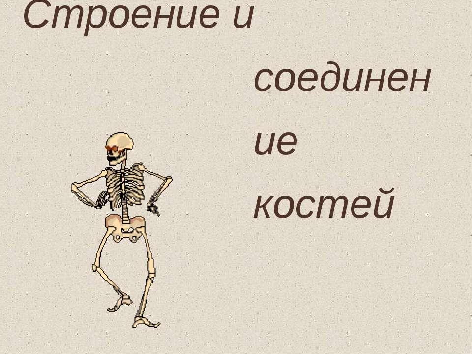 Строение и соединение костей
