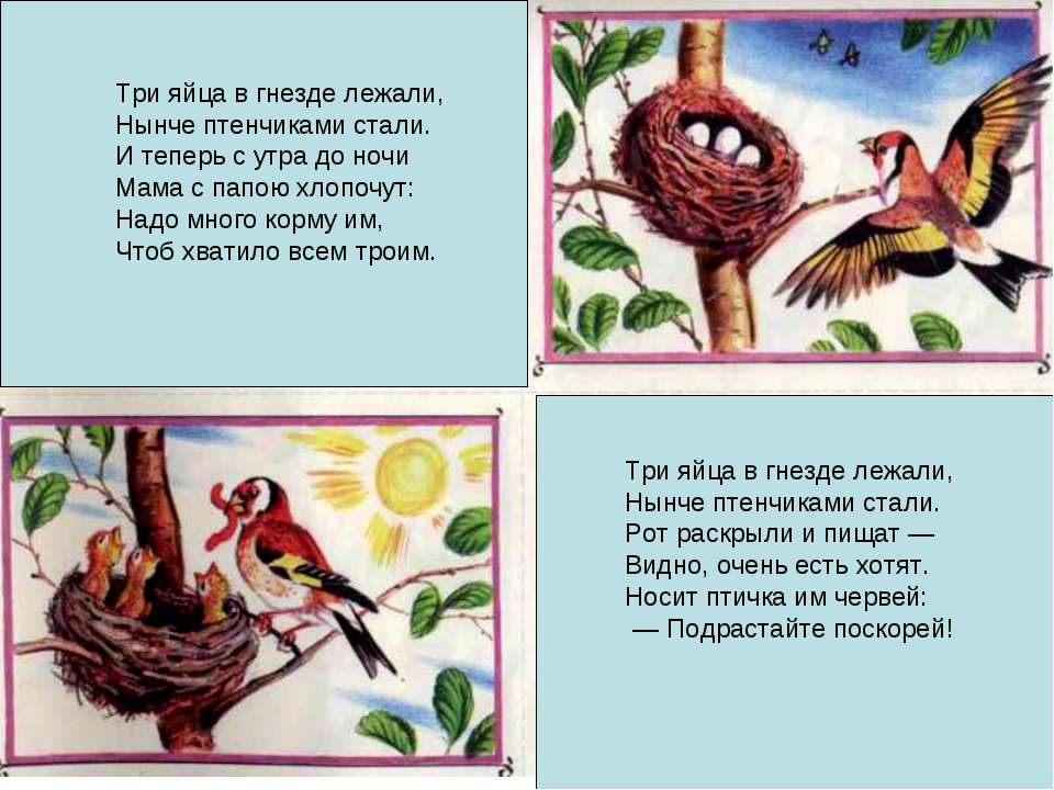 Три яйца в гнезде лежали, Нынче птенчиками стали. Рот раскрыли и пищат — Видн...