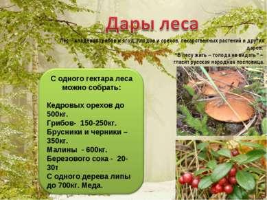 Лес – кладовая грибов и ягод, плодов и орехов, лекарственных растений и други...