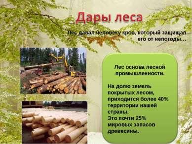 Лес давал человеку кров, который защищал его от непогоды…