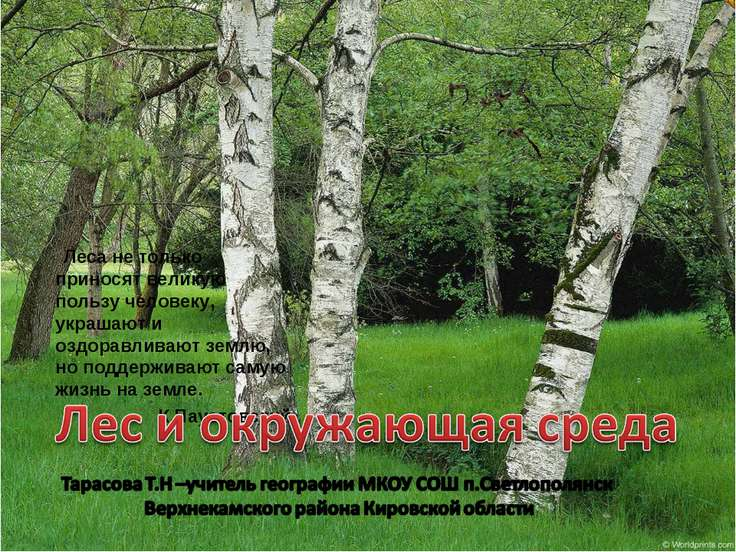 Леса не только приносят великую пользу человеку, украшают и оздоравливают зем...