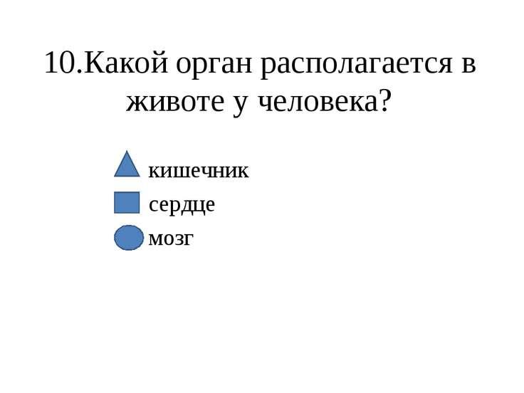 10.Какой орган располагается в животе у человека? кишечник сердце мозг