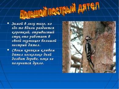 Зимой в лесу тихо, но где-то вдали раздается короткий, отрывистый стук-это ра...