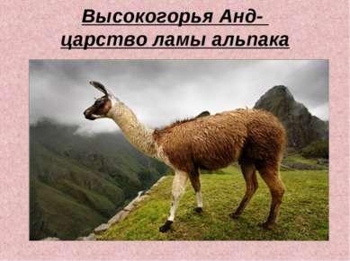 Высокогорья Анд- царство ламы альпака