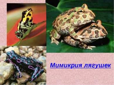 Мимикрия лягушек