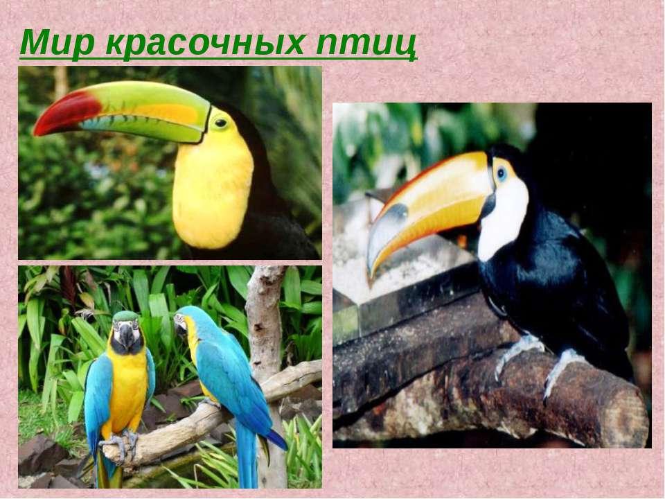 Мир красочных птиц